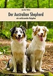 australian shepherd zu verschenken australian shepherd in not