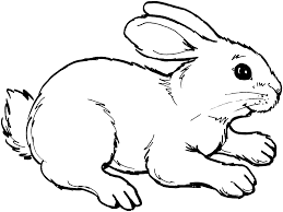 winter animals coloring pages free rabbit coloring pages