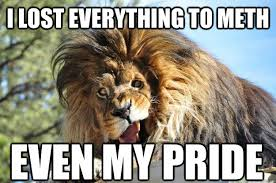 Lion Meme - i lost everything to meth even my pride meth lion quickmeme