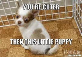 Cute Puppy Meme - cute puppy meme 28 images top 79 funny and cute puppies memes