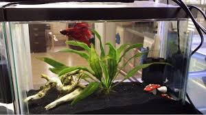 10 gallon planted tank led lighting best 10 gallon fish tank and aquarium kit for sale reviews guide
