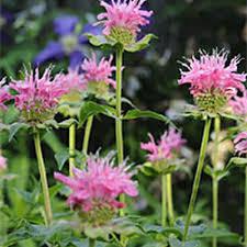 attracting beneficial bees gardener u0027s supply