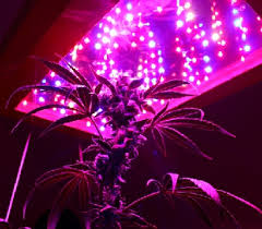 cheap grow lights for weed led grow lights make growing marijuana easy or do they toke