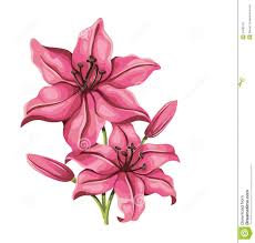 style flower detailed lily flower in vintage style vector stock vector
