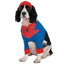 Halloween Costumes Cats Wear Spider Man Costume Pets Pet Costumes Springer Spaniel
