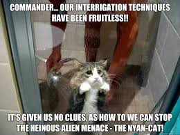 Cat Alien Meme - commander our interrigation techniques have been fruitless