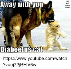 away with you diabeetus cat angr kitty needs a laugh
