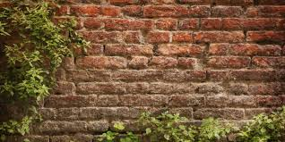 Brick Wall by Brick Wall Optical Illusion Is Driving Everyone You Know The