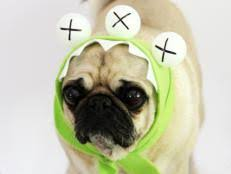 Halloween Dogs Costumes Halloween Costume Ideas Dogs Cats Diy