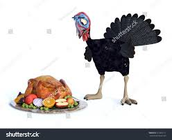 silly turkey looking chocked when stock illustration
