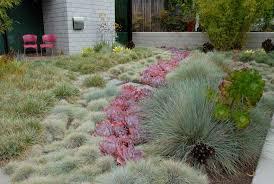 the dry garden u0027reimagining the california lawn u0027 l a at home