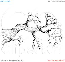 sketched tree clipart clipground
