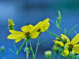 free photo flower yellow plant free image on pixabay 2548964