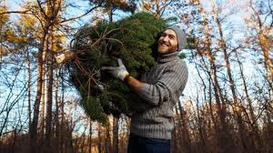 philadelphia streets department announces christmas tree recycling
