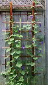 Trellis For Wisteria Best 25 Garden Trellis Ideas On Pinterest Trellis Ideas