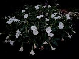 kansas native plant society 6th annual mothing at long lips farm kansas usa u2013 guest post by