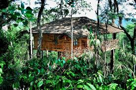 13 top tree house hotels in india for all budgets