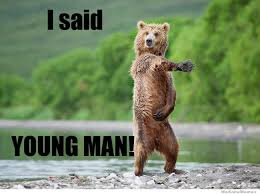 funny fun lol hilarious bear animals memes pics images photos