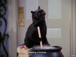halloween cat meme pin by anthony pena on the best of salem saberhagen pinterest