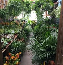 garden center brooklyn plant nursery brooklyn manhattan nursery