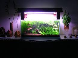 Best Substrate For Aquascaping 29 Best My Non Co2 Planted Shrimp Aquarium Images On Pinterest