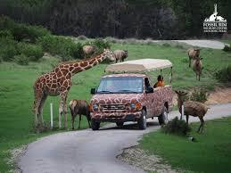 Texas wildlife tours images Fossil rim wildlife center glenrose tx family tour 32 38 jpg