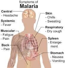 What Is The Color Of 2017 by World Malaria Day 2017 What Is Malaria Symptoms Treatment And