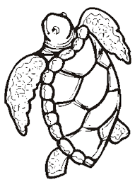 coloring elegant turtle colouring coloring turtle