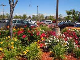 California Landscaping Ideas Low Water Landscaping Southern California Low Water Landscaping