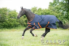 Outdoor Rugs For Horses Gallop 100g Lightweight Fill Weight Turnout Outdoor Rug Fast