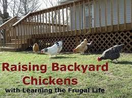 Chickens Backyard 40 Best My Backyard Farm Images On Pinterest Gardening Veggie