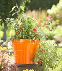 enjoy a vegetable container garden midwest living