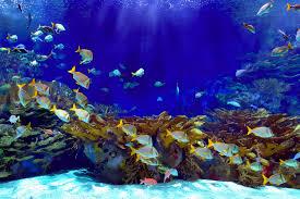 deep blue underwater wallpaper wall mural muralswallpaper co uk