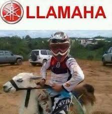 Moto Memes - la mejor moto meme by vmbarahona memedroid