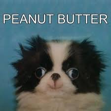 Peanut Butter Meme - peanut butter derp weknowmemes