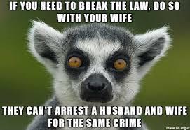 Lemur Meme - big lie lemur meme on imgur