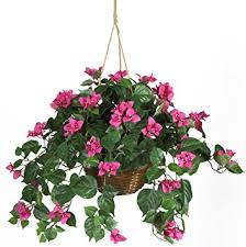 flower baskets nearly 6608 bougainvillea hanging basket
