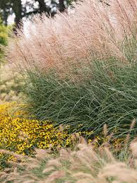15 ways to use ornamental grasses in your landscape grasses