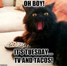 Tuesday Meme - oh boy cat taco tuesday imgflip