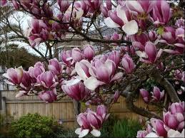 138 best tree s for ohio images on gardening garden