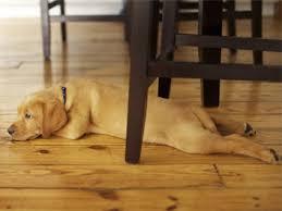 pet flooring from bruce