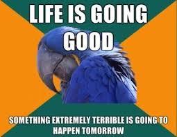 Paranoid Parrot Memes - paranoid parrot meme random pinterest meme anxiety cat and