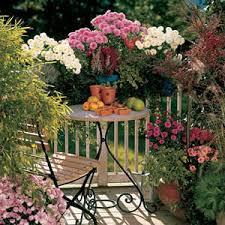 balkon und terrassenpflanzen optimale pflege balkon und terrassenpflanzen im