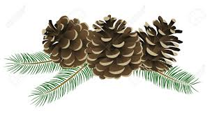 pine cone clipart conifer pencil and in color pine cone clipart