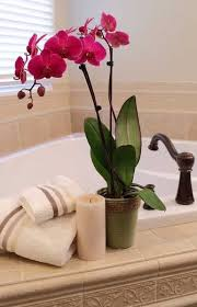 Bathroom Staging Ideas Colors 395 Best Staging Selling Your Home Images On Pinterest Home