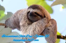international sloth day october 20 2017 happy days 365