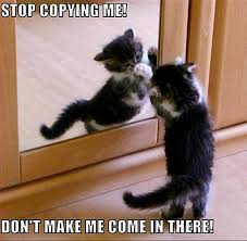 Copy Cat Meme - animal humor animal humor cat funny how funny i love it