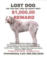 for adoption nj missing near whitehouse station nj