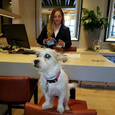 does spirit halloween take checks tips for helping your dog adjust to hotel stays fido friendly
