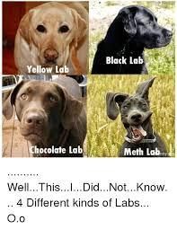 Different Kinds Of Memes - black lab yellow la chocolate lab meth labnny denu